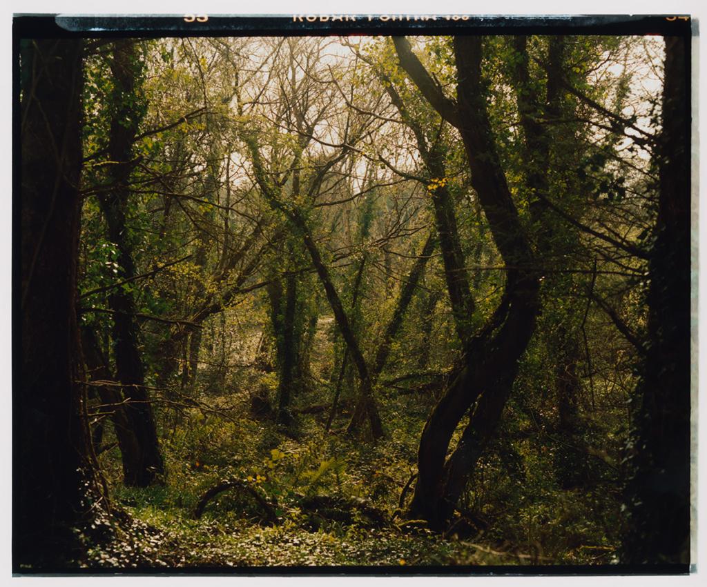 Raven Forest, Ireland